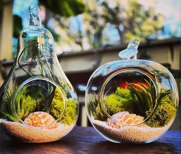 hava bitkisi sulama