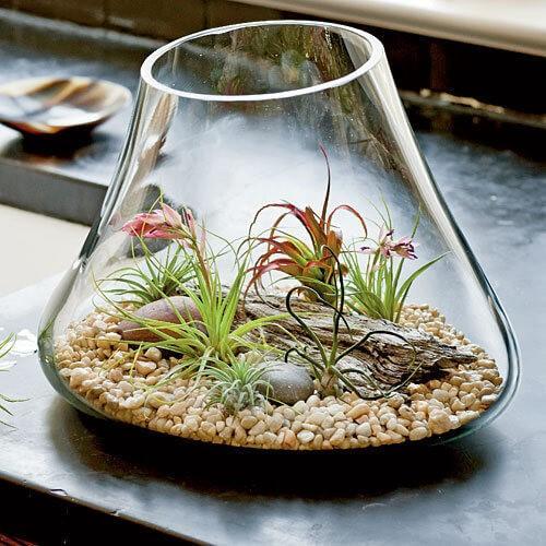 hava bitkisi terraryum